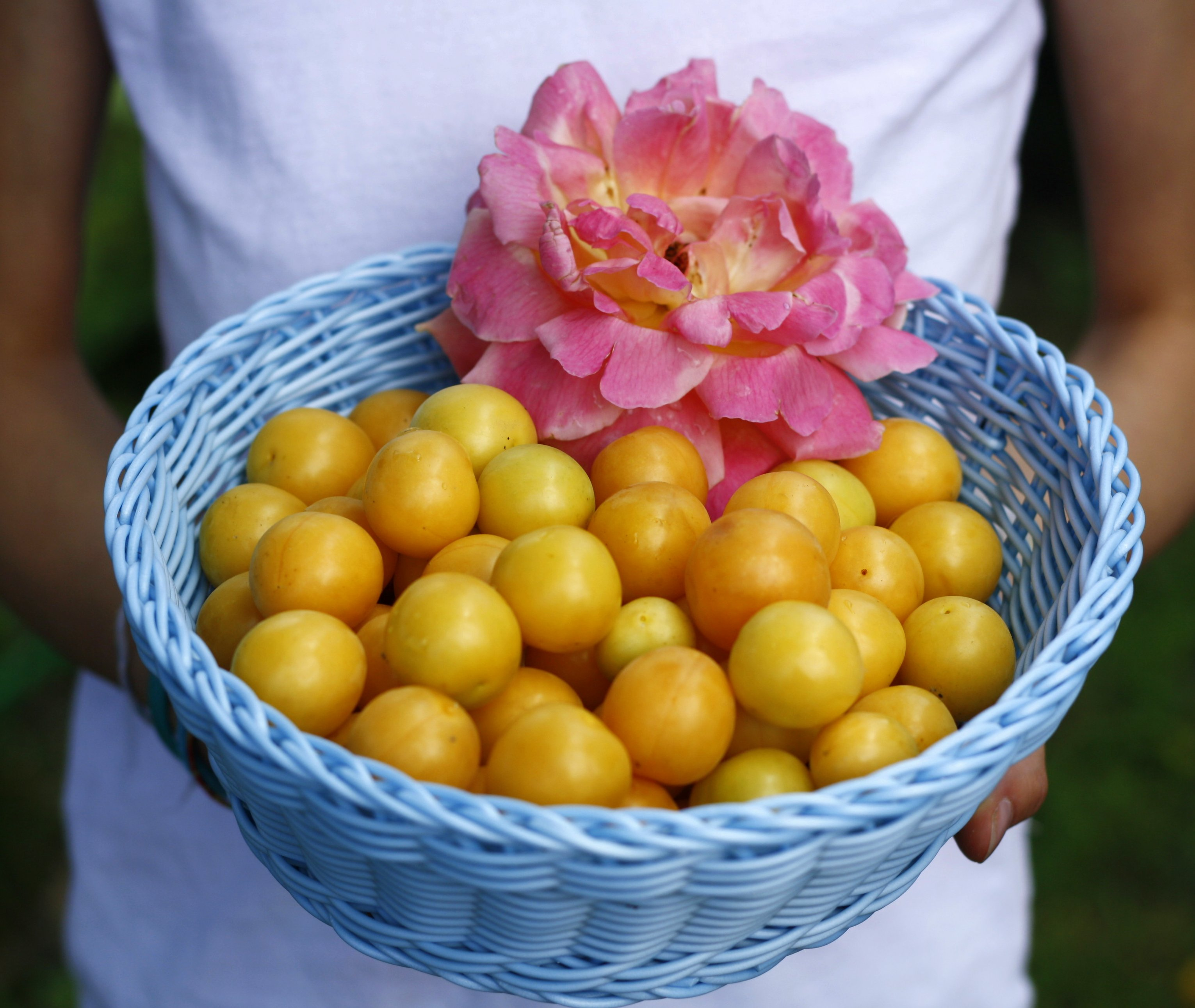 Mirabelle Plums.