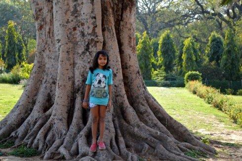 In Lodi Gardens